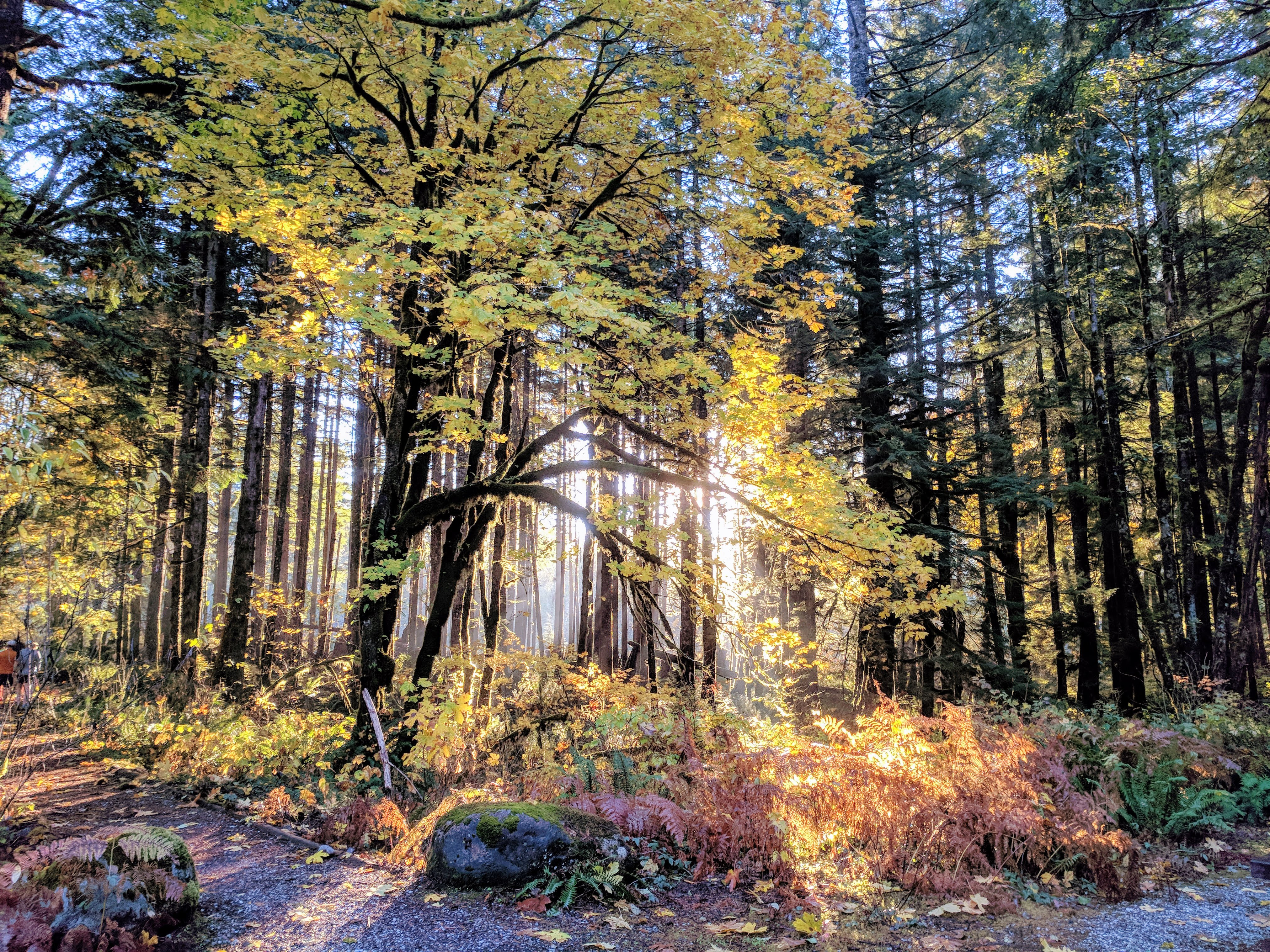 Contours: How do you put a value on a forest?